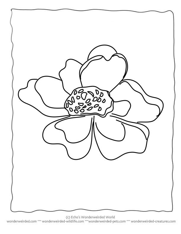 612x792 Flower Coloring Sheets Anemone Wonderweirded Free