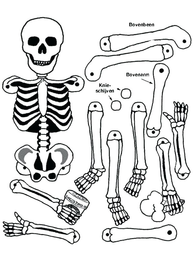 618x874 Skeletal System Coloring Pages Cliprts Related To How To Draw