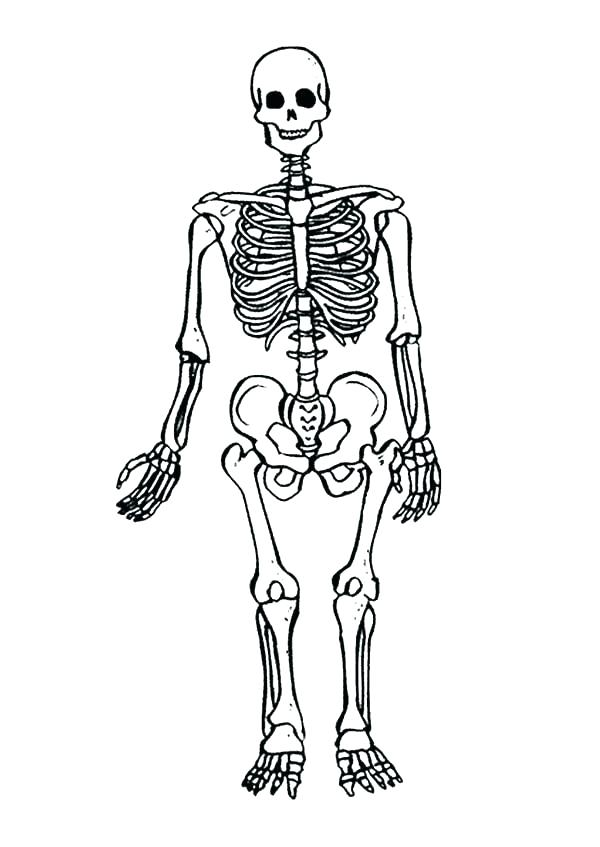 600x847 Skeletal System Coloring Pages Human Skeleton Anatomy Activity