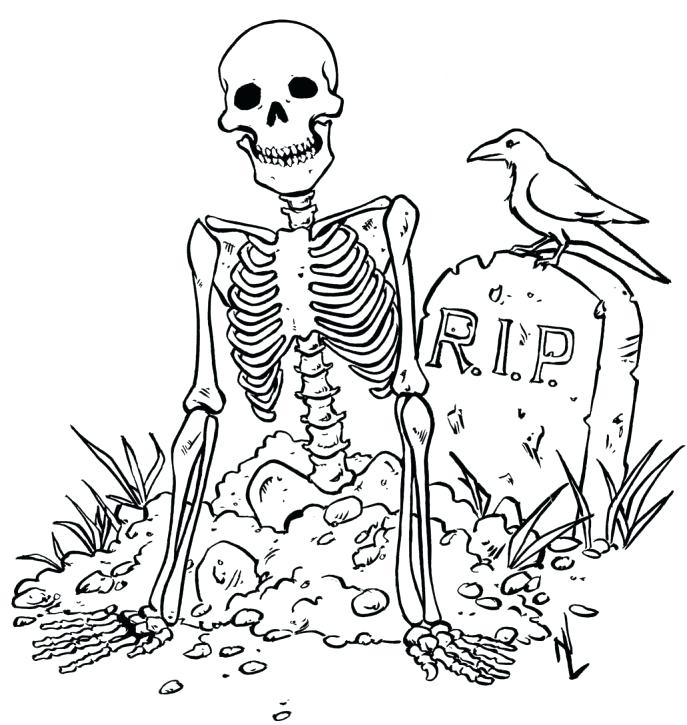 687x725 Skeletal System Coloring Pages Medium Size Of Skeleton Coloring