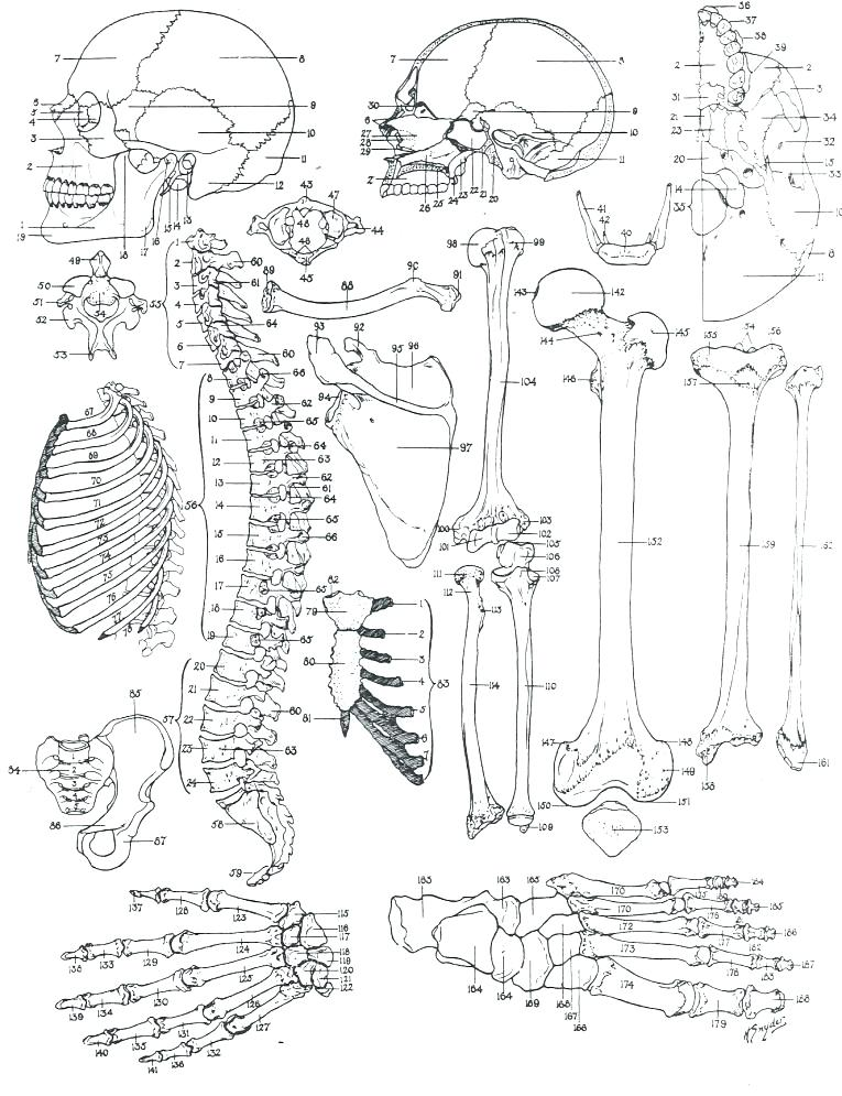 765x995 Skeletal System Coloring Pages Skeletal System Coloring Pages