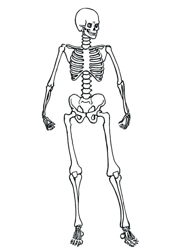600x847 Skeleton Coloring Sheet Skeletal System Coloring Pages Human