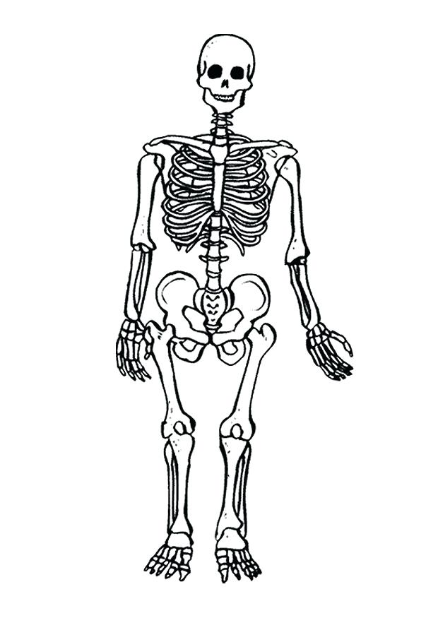 620x875 Skeleton Coloring Sheet Skeletal System Colouring Pages Page