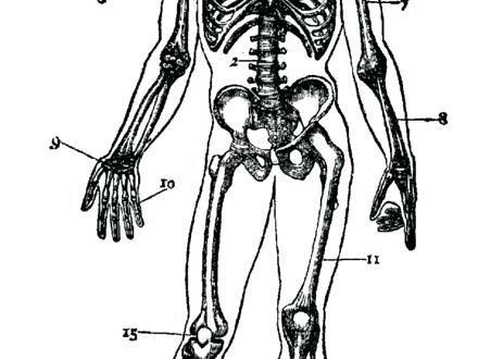 440x330 Coloring Skeletal System Coloring Pages Human Skeleton Sheets