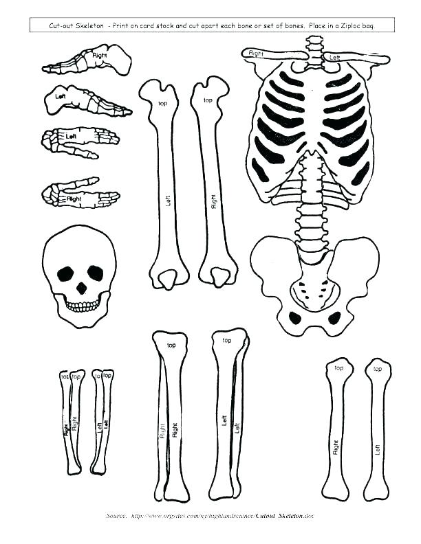 612x792 Skeletal System Coloring Pages