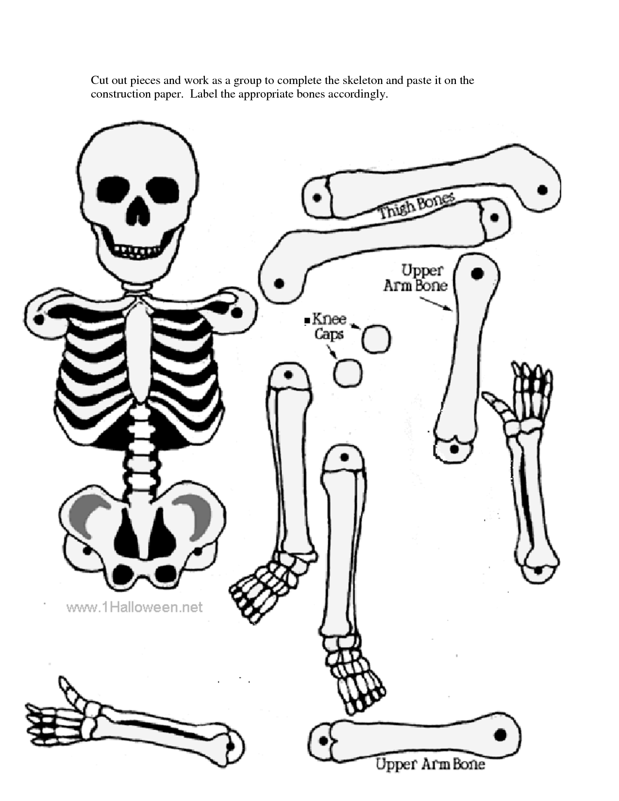 1275x1650 Skeletal System Without Label