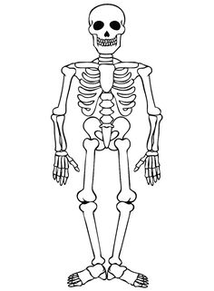 236x321 Anatomy Coloring Book Pages Free Printable Coloring Pages Body