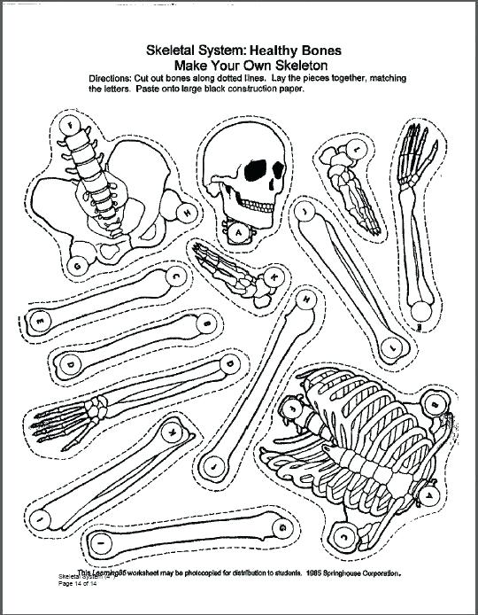 540x694 Coloring Pages And Coloring Books Skeletal System Coloring Book