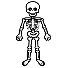 Skeleton Coloring Pages Anatomy