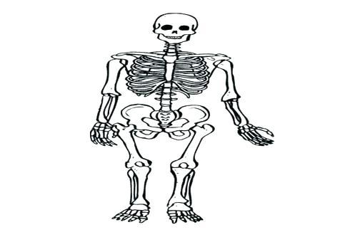 476x333 Human Skeleton Coloring Page Anatomy Of A Bone Coloring Skeleton