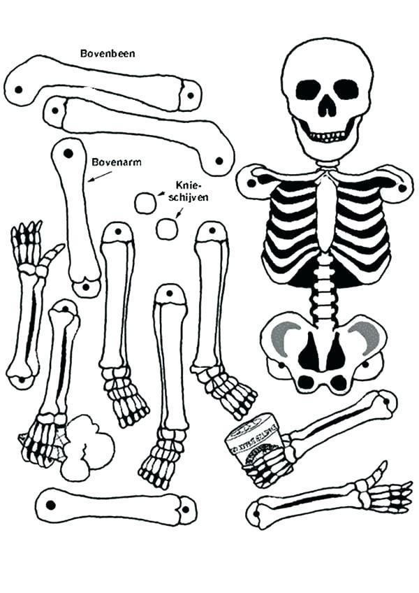 600x848 Skeleton Coloring Sheet Anatomy Skeleton Coloring Sheet Anatomy