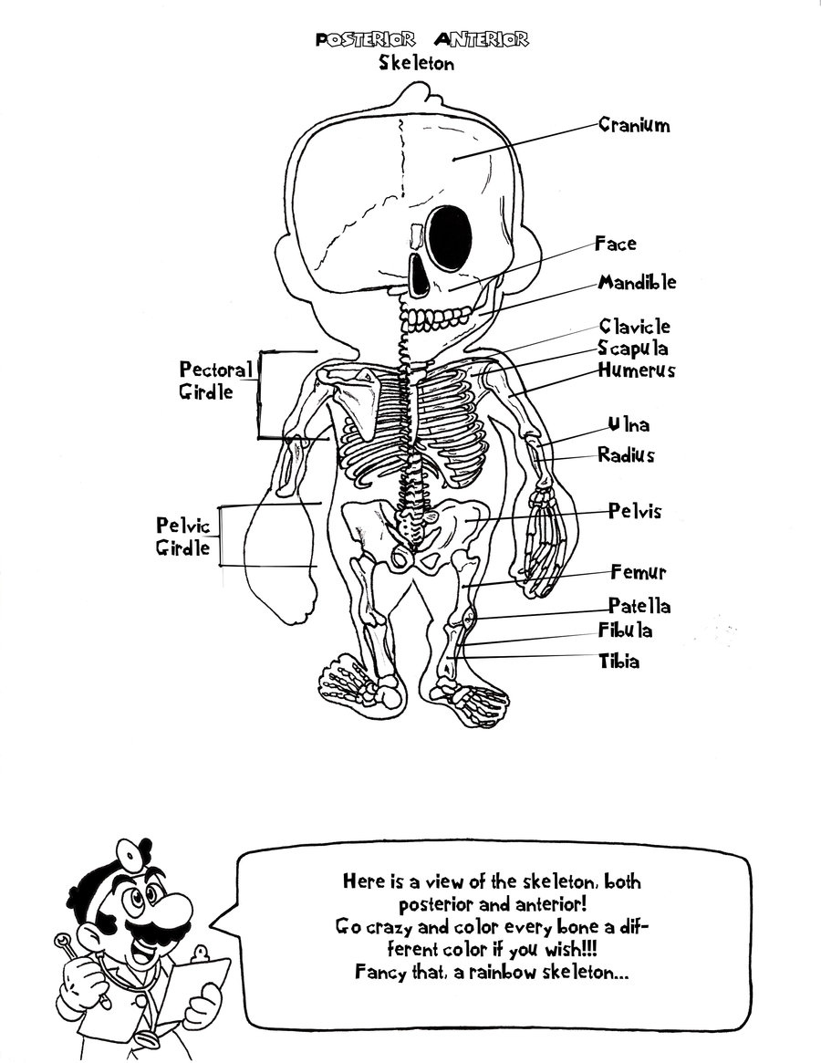 900x1165 Anatomy Coloring Pages Beautiful Skeletal System Anatomy Coloring