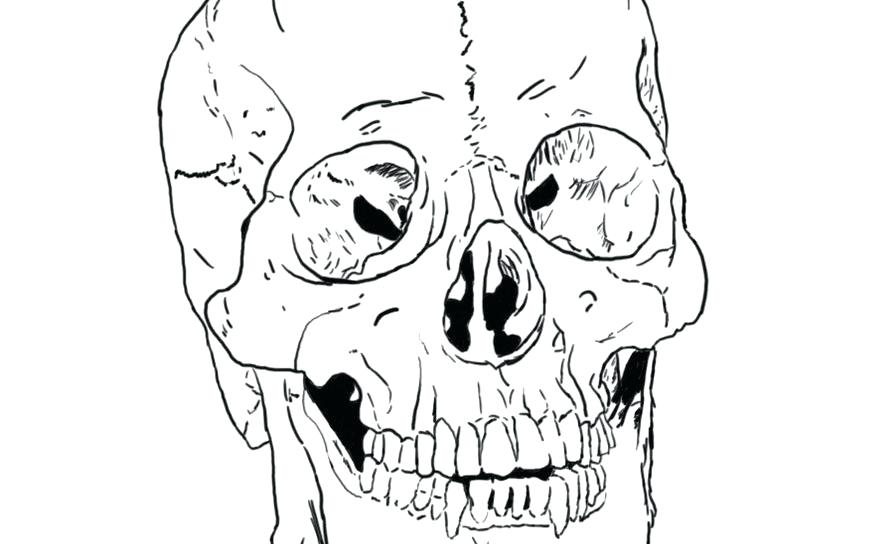 894x544 Skull Coloring Pages Anatomy Skeleton Coloring Pages Anatomy Skull