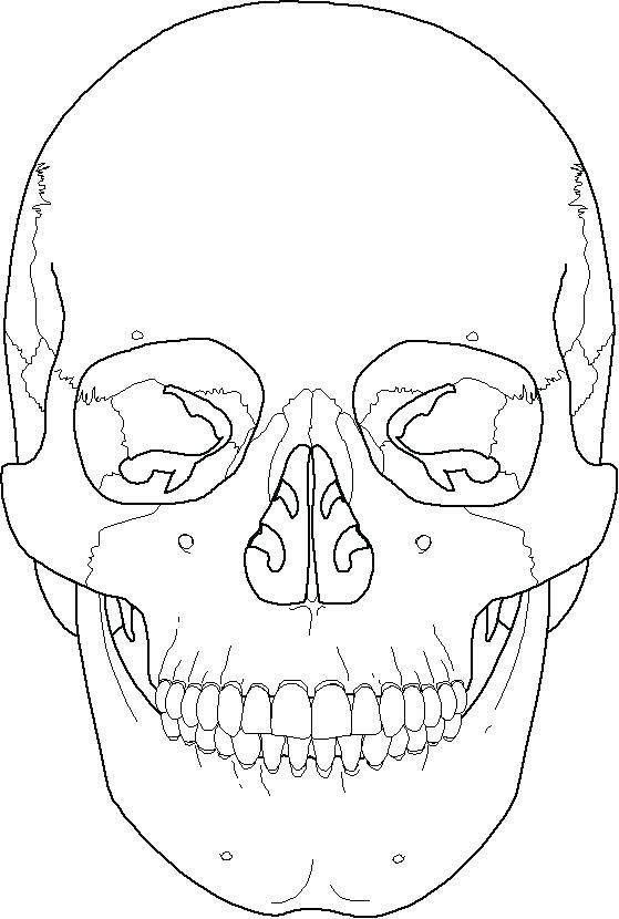559x830 Skull Coloring Pages Anatomy Skull Color Pages Skull Coloring