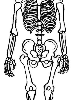 322x425 Skeleton Coloring Pages Anatomy Printable Skeleton Coloring Pages