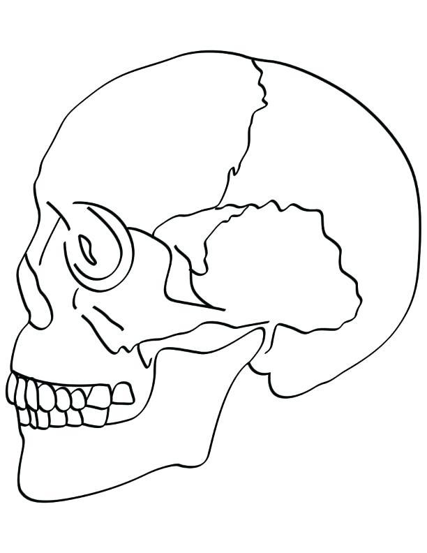 612x792 Bone Coloring Page Skull Bones Coloring Pages Skull Bones Anatomy