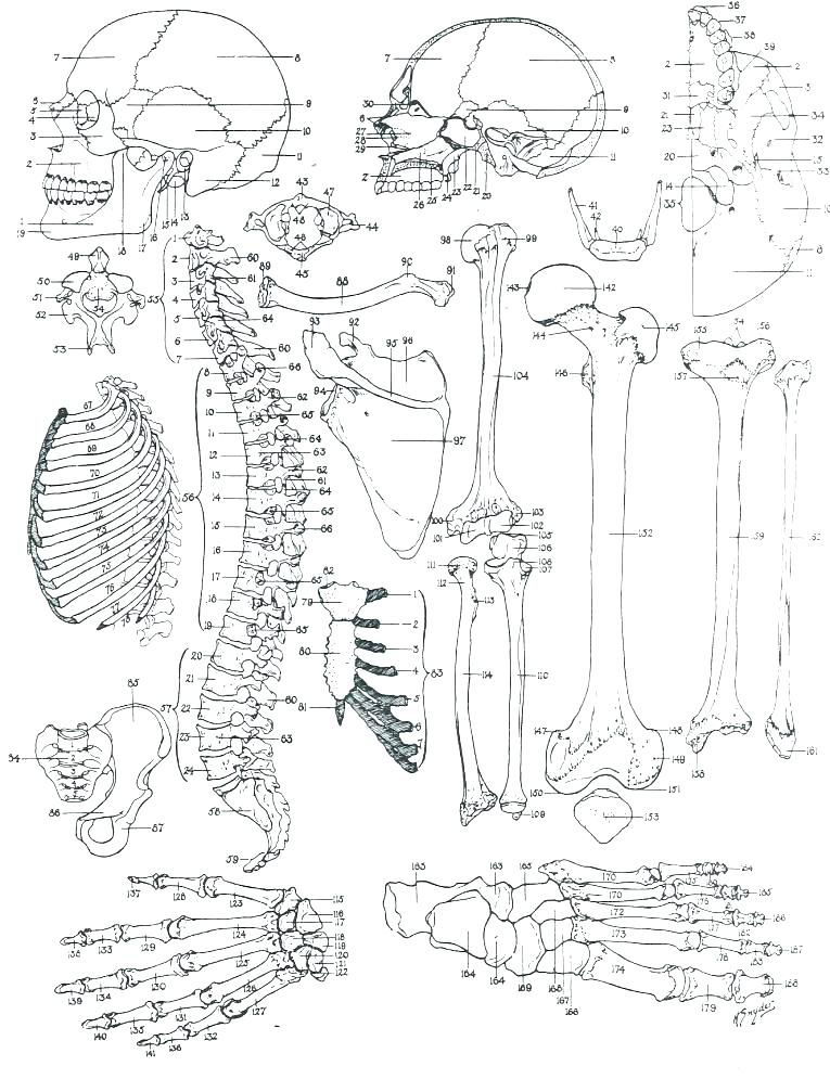 765x995 Human Anatomy Coloring Pages Human Anatomy Coloring Book And Heart