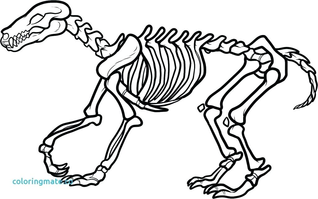 1024x642 Skeleton Coloring Page Skull Coloring Pages Anatomy Medium Size