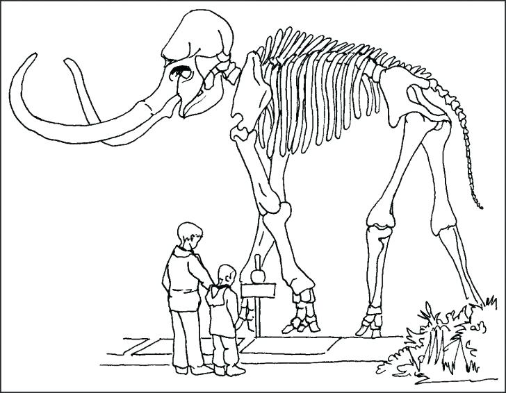 728x566 Skeleton Coloring Pages To Print Human Skeleton Coloring Pages