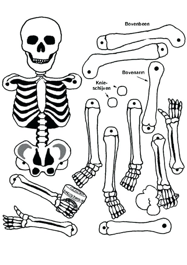 618x874 Skeleton Coloring Page Body Skeleton Colouring Pages Skeleton