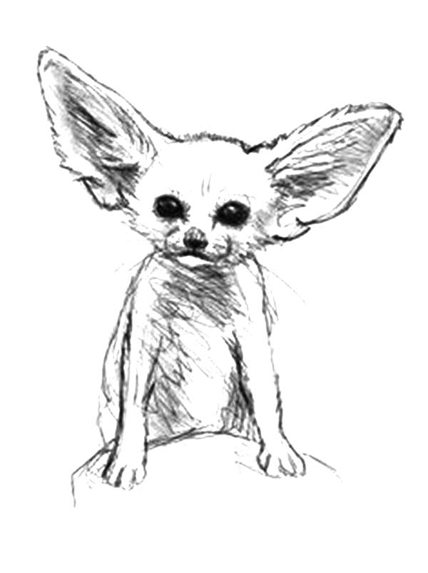 600x803 Desert Fox Sketch Coloring Pages