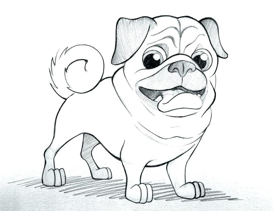 900x696 Pug Coloring Page Pug Coloring Pages And Pug Dog Sketch Coloring