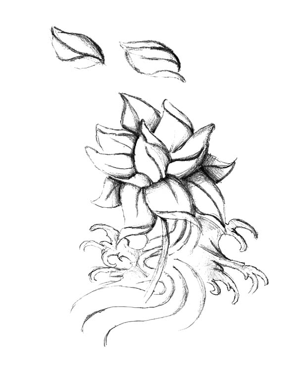 600x748 Simple Lotus Flower Sketch Coloring Pages Batch Coloring
