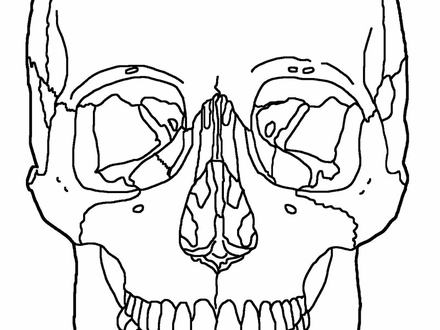 Skull Anatomy Coloring Pages
