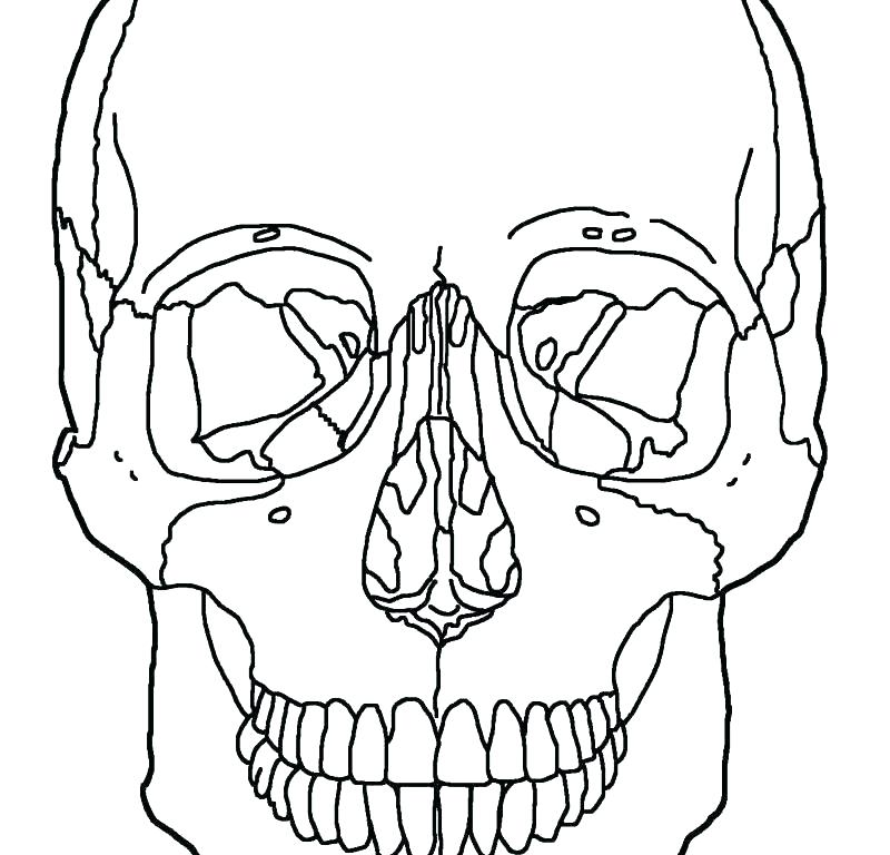 Skull Anatomy Coloring Pages at GetDrawings | Free download