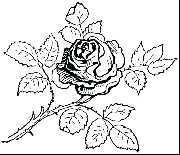 625x539 Skull And Roses Coloring Pages Skull And Roses Coloring Pages