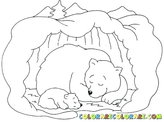530x395 Coloring Pages Bear Coloring Page Bear Bear Coloring Pages