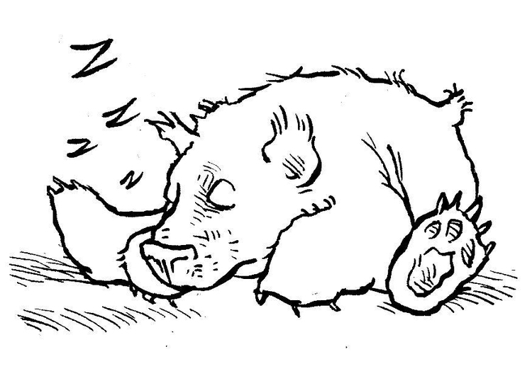 750x531 Coloring Page Sleeping Bear