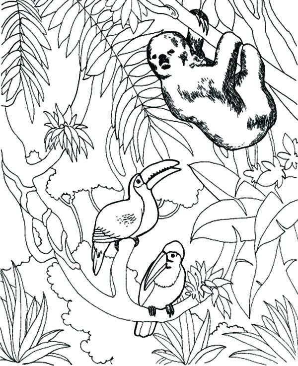 600x737 Toucan Coloring Page Sloth Coloring Pages Sloth And Toucan Bird