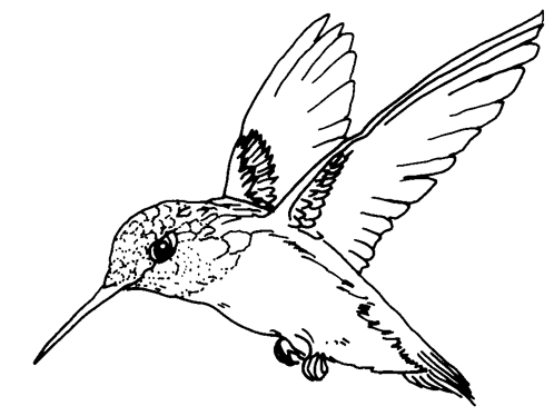 498x374 Small Birds Flying Beautiful Coloring Pages For Kids