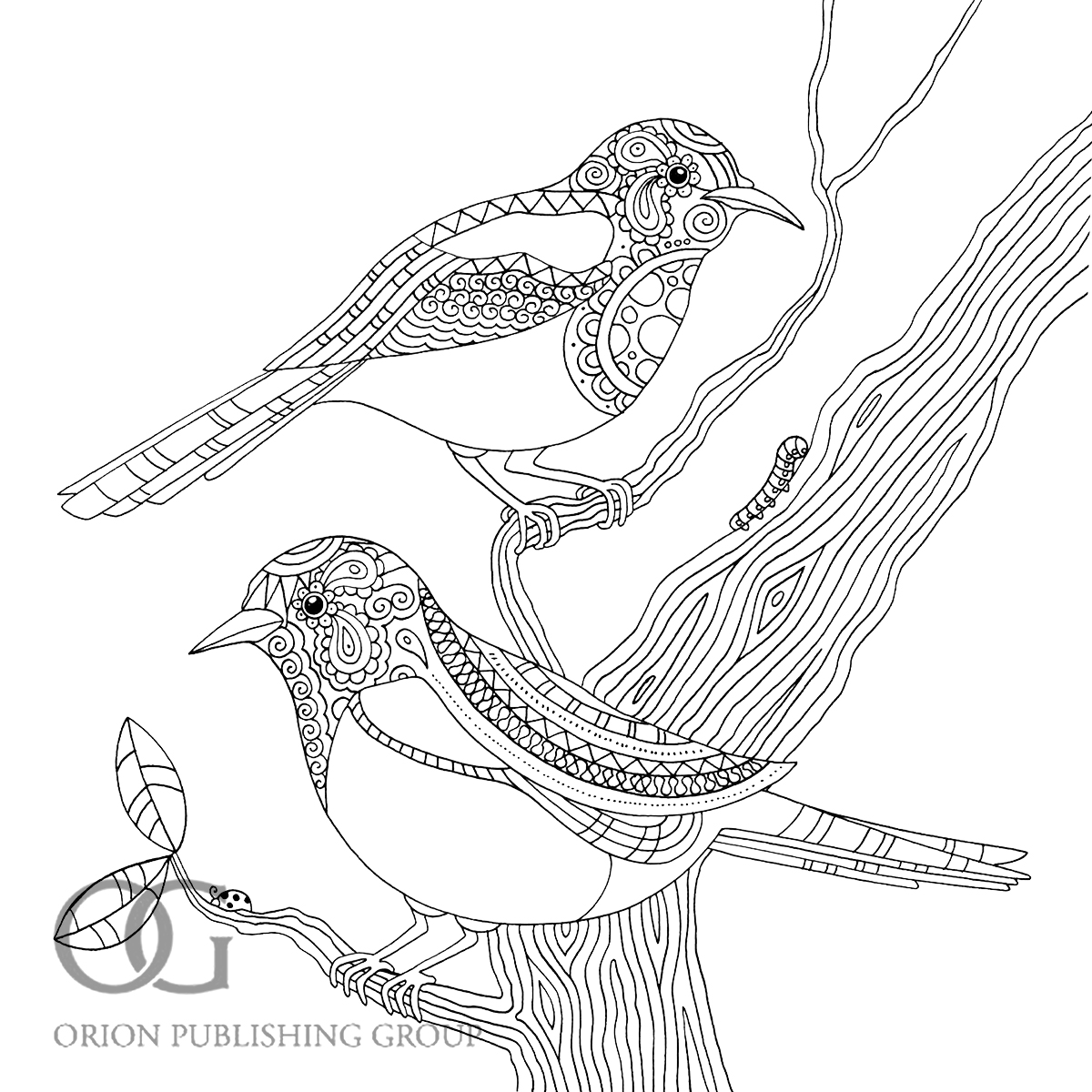 1200x1200 Wanted Pictures Of Birds To Colour In Bird Col