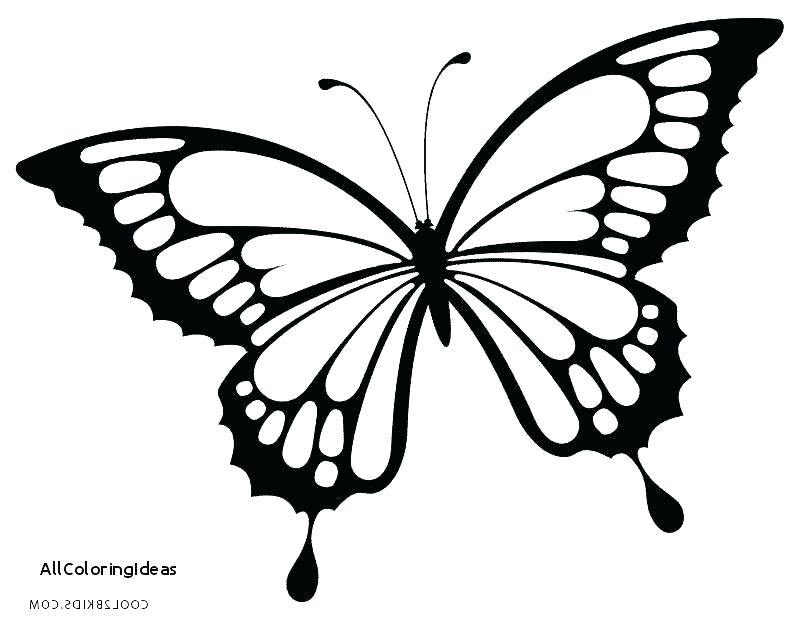 Small Butterfly Coloring Pages at GetDrawings.com | Free for ...