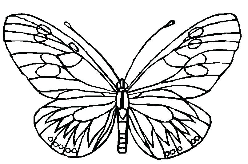 806x534 Butterfly Cycle Coloring Pages Printable For Kids P Coloring