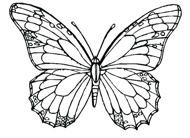 736x536 Printable Butterfly Coloring Page Beautiful Creation Of Nature