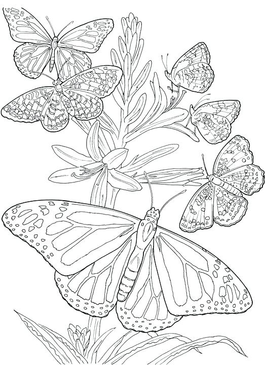 523x720 Printable Butterfly Coloring Pages Six Butterfly Adult Coloring