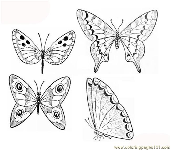 650x570 Small Butterfly Coloring Pages
