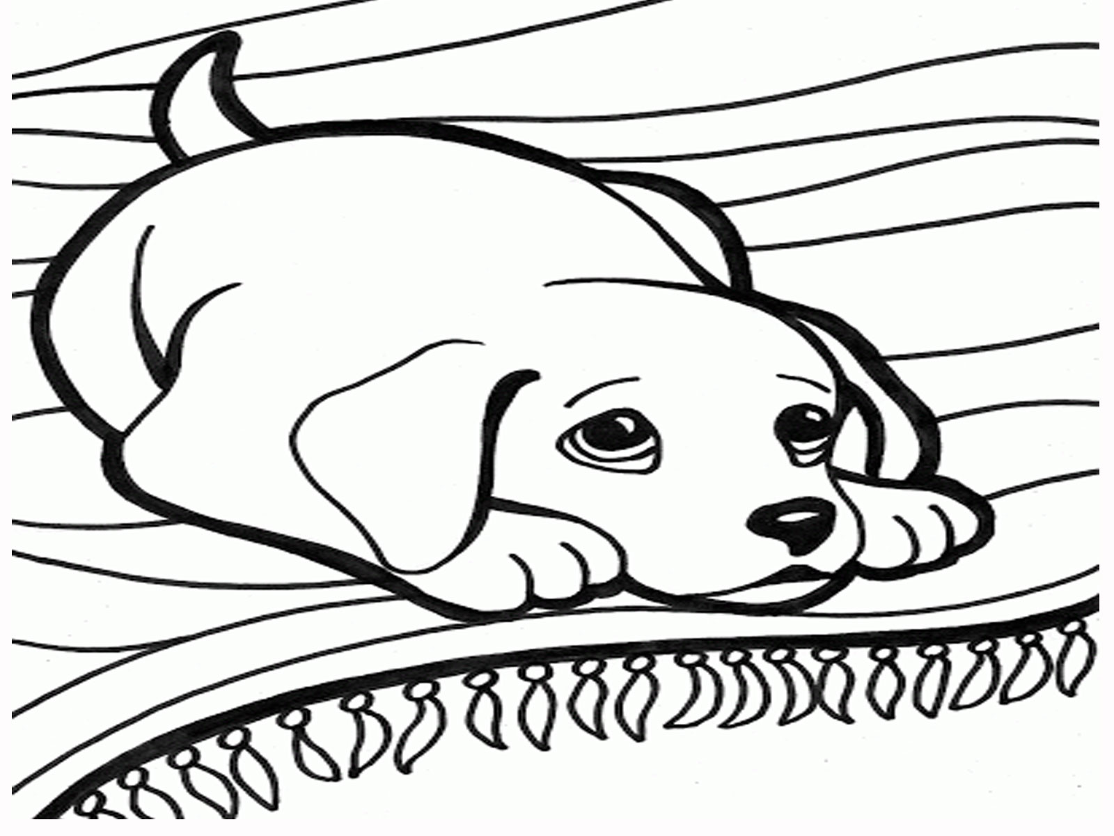 1600x1200 Small Dog Coloring Pages Kids Coloring