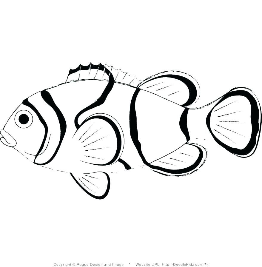 878x895 Small Fish Coloring Pages S S Small Fish Coloring Pages Printable