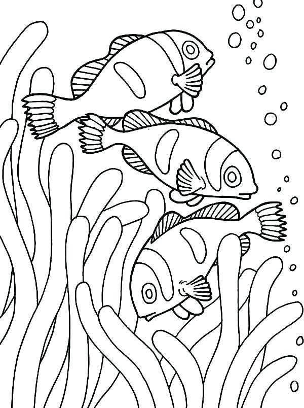 600x804 Fish Coloring Pages For Preschoolers