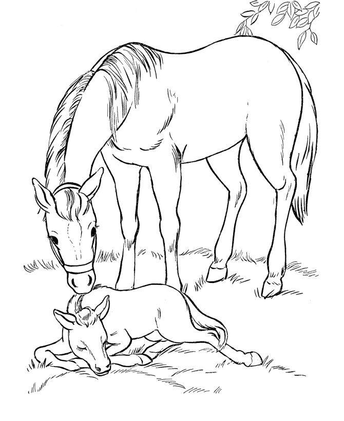 Small Horse Coloring Pages