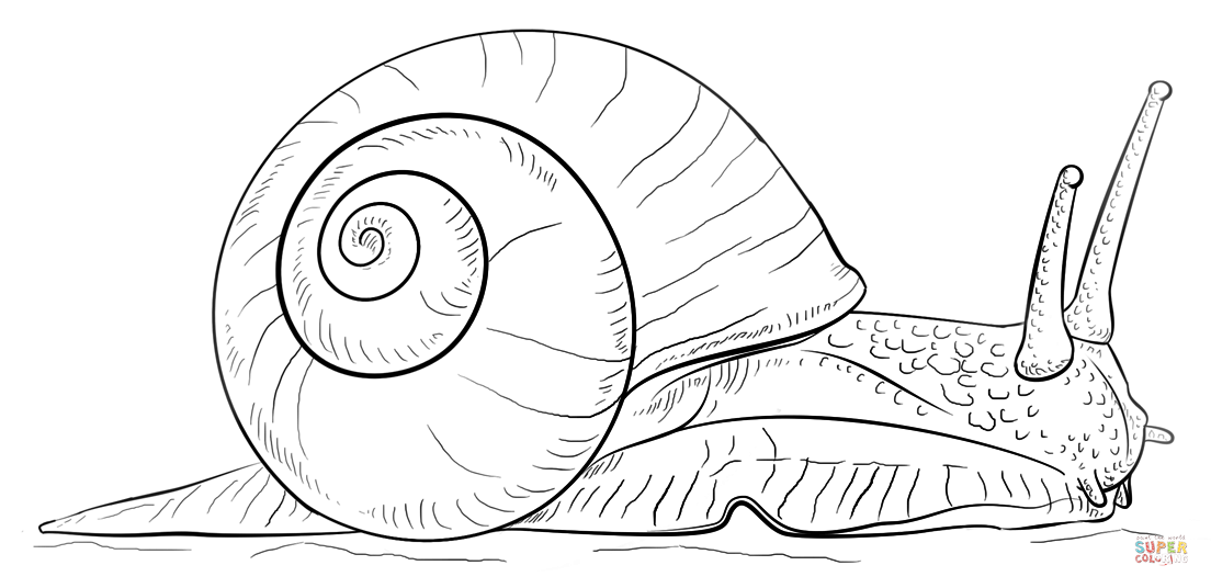 1104x536 Snail Coloring Page