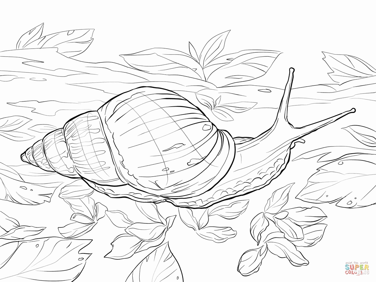 1199x899 Snail Coloring Page Stock Snail Coloring Pages Drawing For Kids