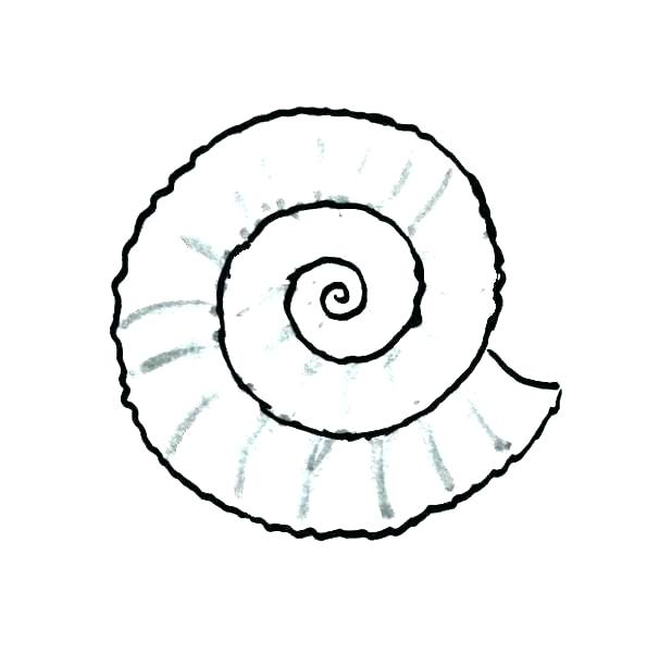 618x600 Snail Coloring Pages Seashell Coloring Page Sea Shells Coloring