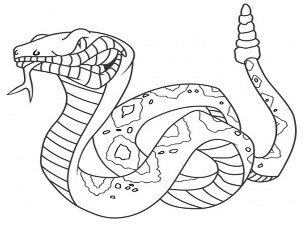 1024x768 Elegant Snake Coloring Pages Snake Coloring Pages Free Printable