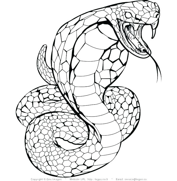 736x750 Snakes Coloring Pages
