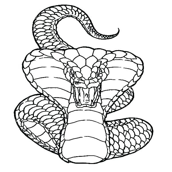 600x600 Coloring Page Snake Coloring Pages Of Snakes Coloring Pages Snakes
